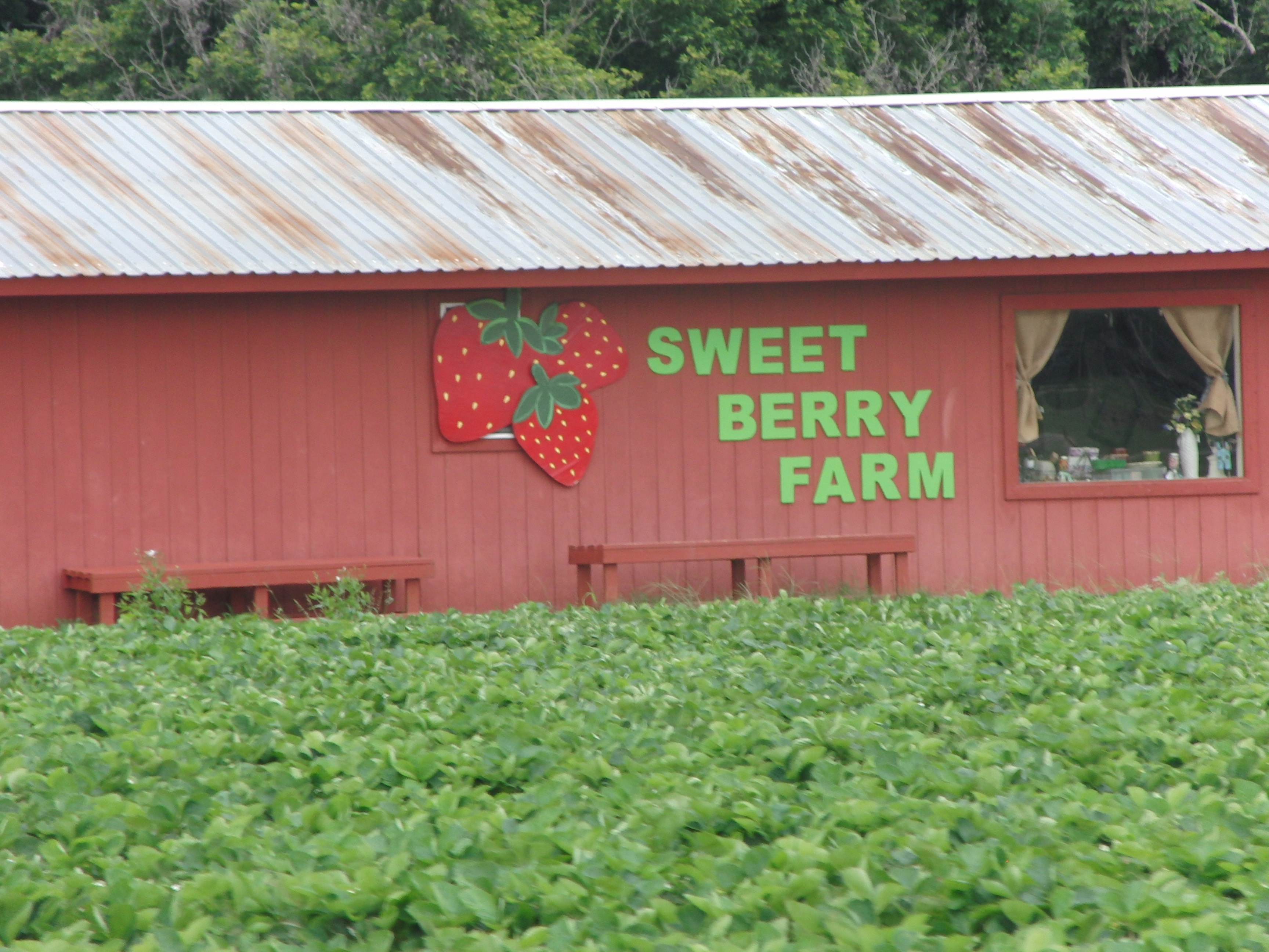 Sweet Berry Farm Marble Falls