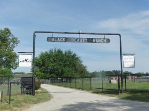 Pics entrance to black beauty ranch