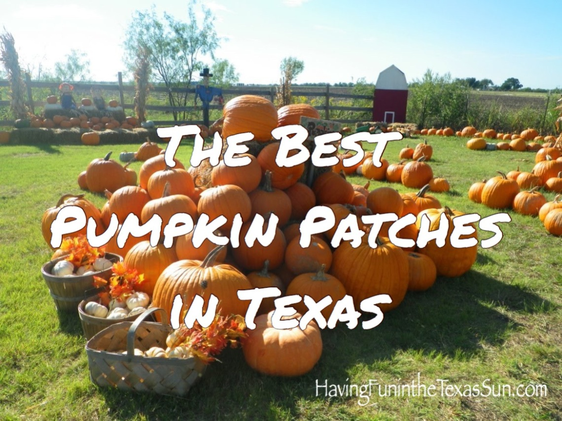 The Best Pumpkin Patches in Texas for 2021