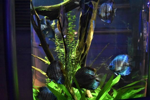 Downtown Aquarium, Houston