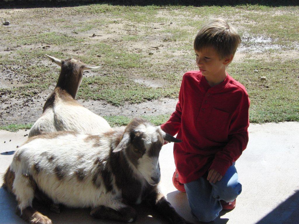 fossil rim goat
