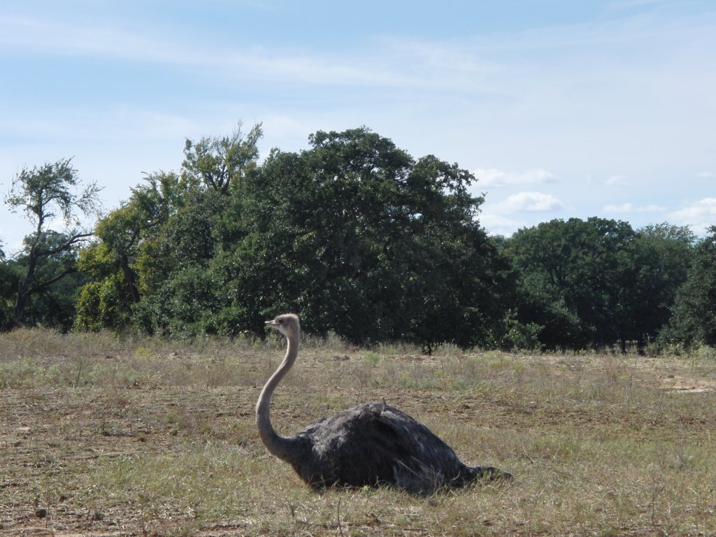 fossil rim ostrich
