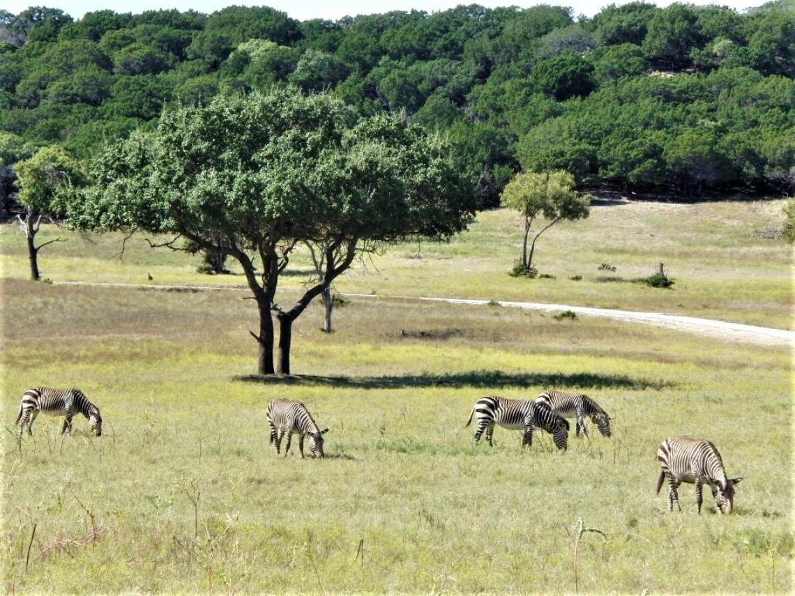fossil rim zebras