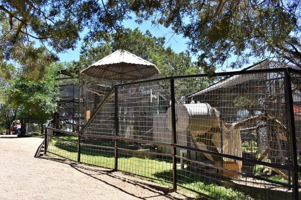 Austin Zoo, Austin TX.