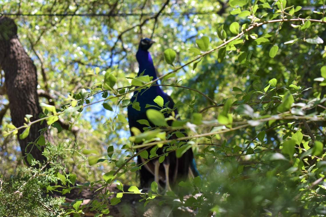 Austin Zoo Austin Texas