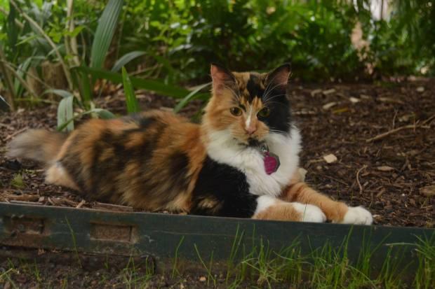 bella the alamo cat