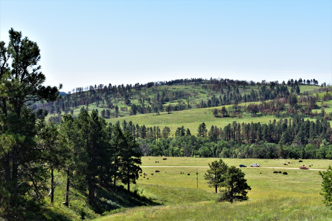 Custer State Park Resort South Dakota