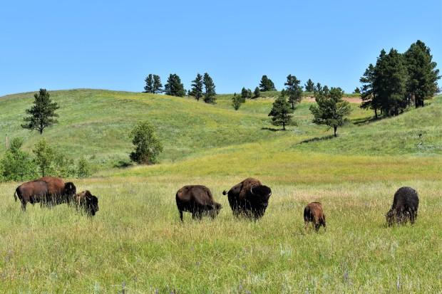 Custer State Park Resort South Dakota