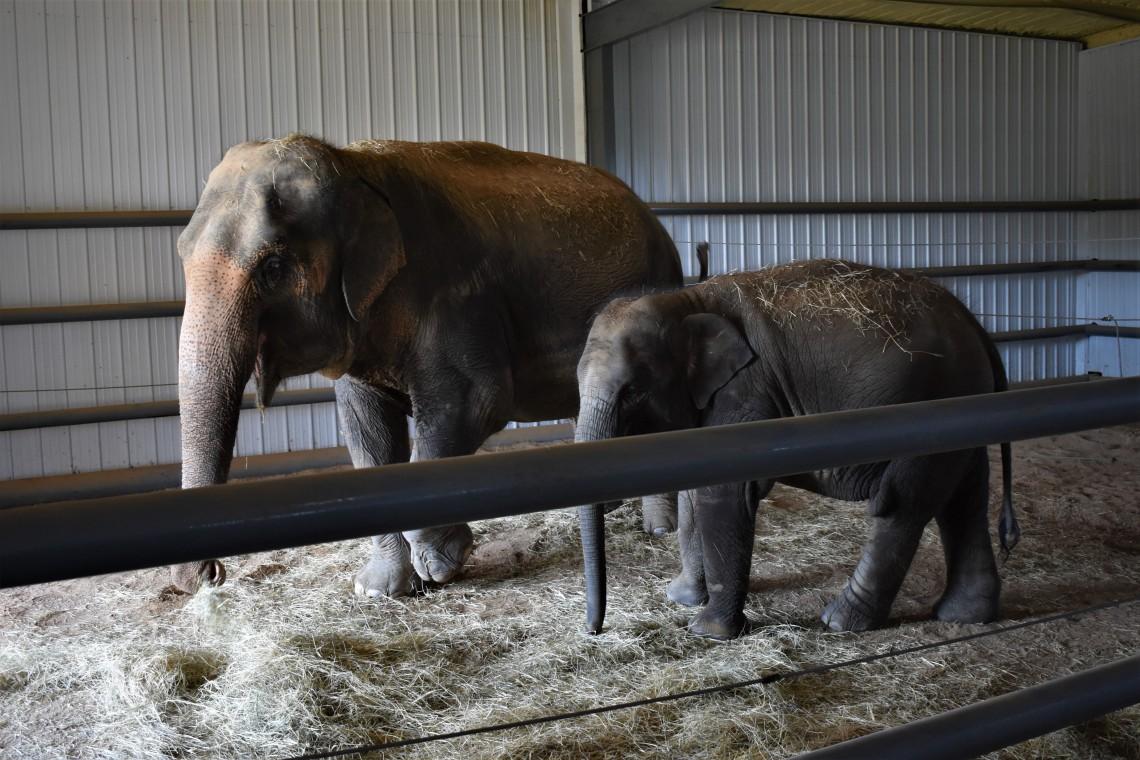Endangered Ark Elephant Sanctuary, Hugo OK Whimpy and Dori