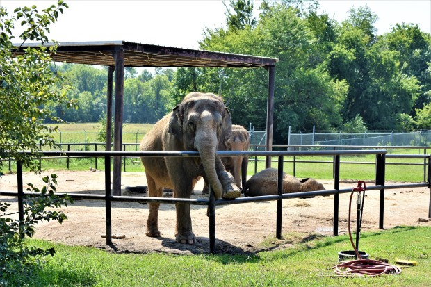 Endangered Ark Elephant Sanctuary, Hugo OK