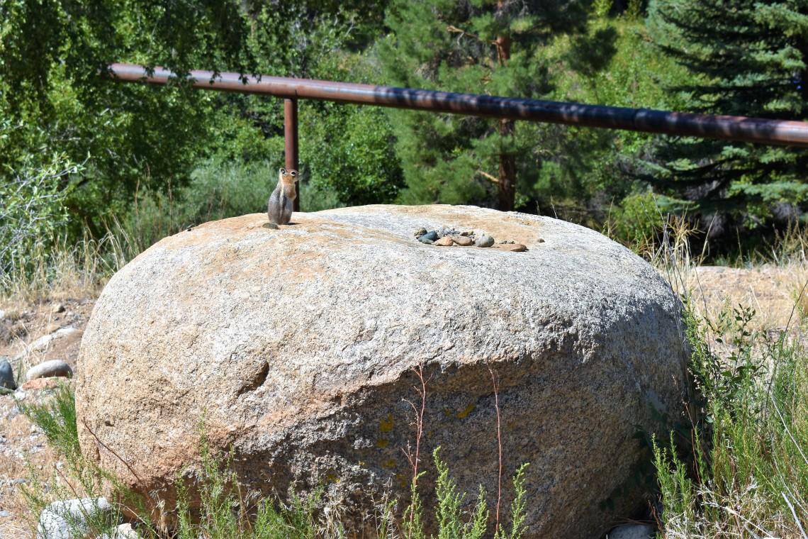Chipmunks in Buena Vista, Colorado