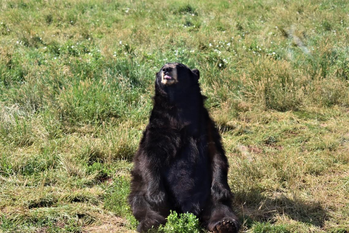 Bear at Bear Country U.S.A. Rapid City South Dakota