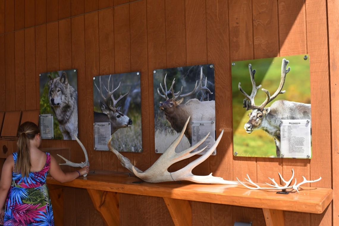 Interactive educational displays at Bear Country U.S.A. Rapid City South Dakota