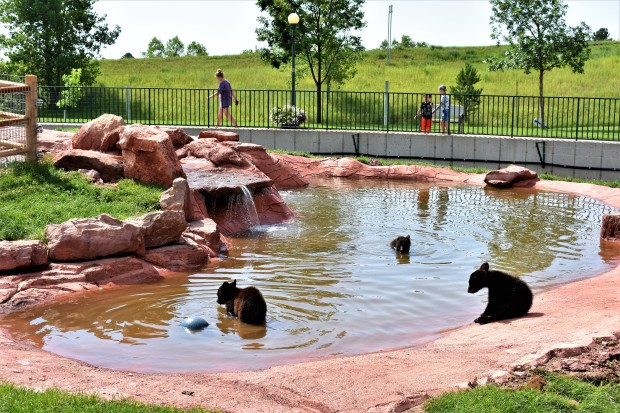 Bear Cubs at Bear Country U.S.A. Rapid City South Dakota