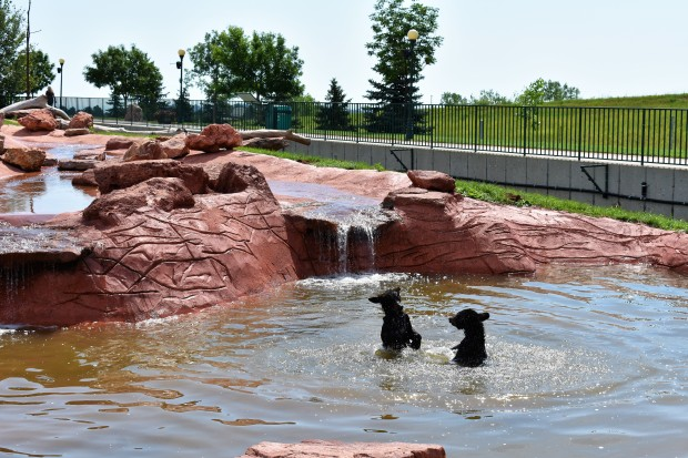 Bear Cubs at Bear Country U.S.A. Rapid City South Dakota