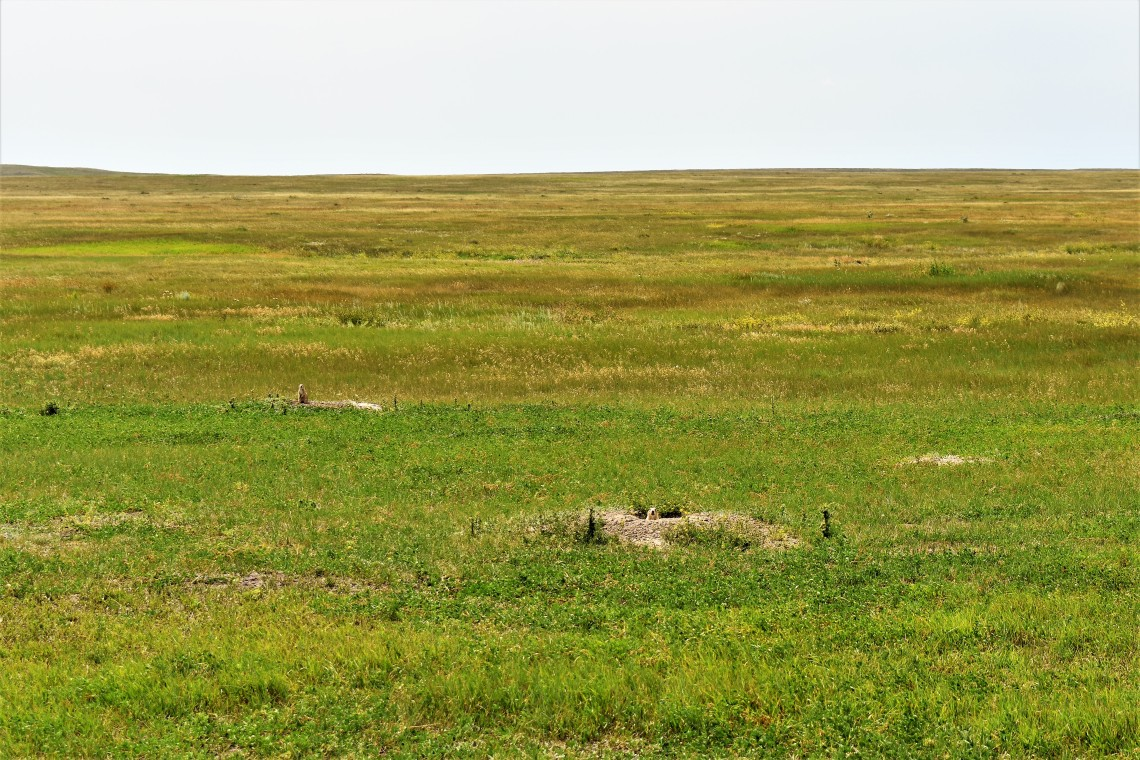 Roberts Prairie Dog Town in Badlands National Park South Dakota