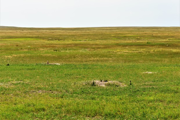 Roberts Prairie Dog Town in Badlands National Park South Dakota