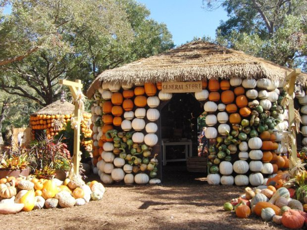 dallas arboretum Fall Pumpkins