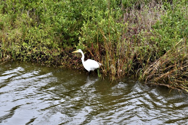 South Padre Island Birding and Nature Center