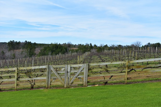 Enoch's Stomp Vineyard and Winery, Harleton