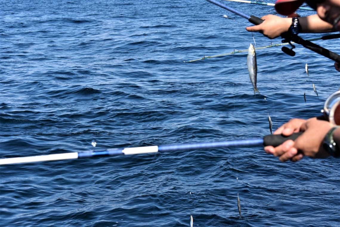Deep Sea Headquarters Fishing Port Aransas