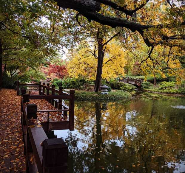Fall festival at the FW Botanic Gardens